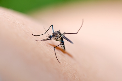 Mosquito bite/freedigitalphotos