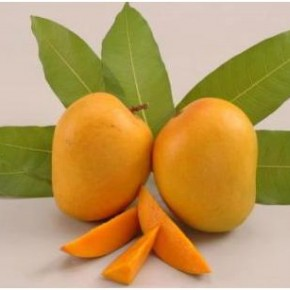 <b>Prices of Alphonso mango slashed</b>