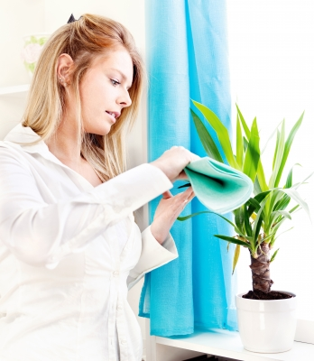Lady cleaning the house plant