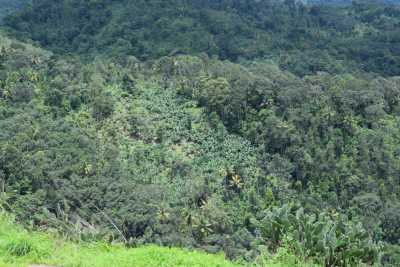 Lush green forests