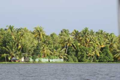 Serenity and the splendour of the backwaters