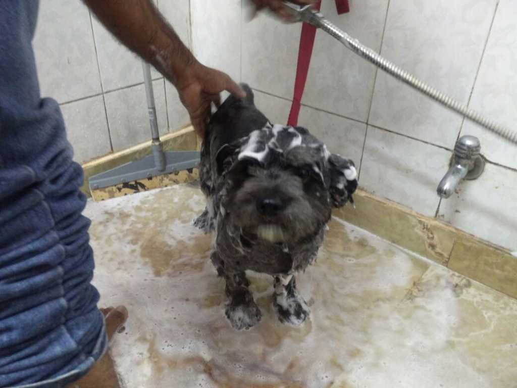 Taking a bath with Whatspup spa