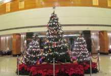 The Christmas tree at Radisson Blu Plaza