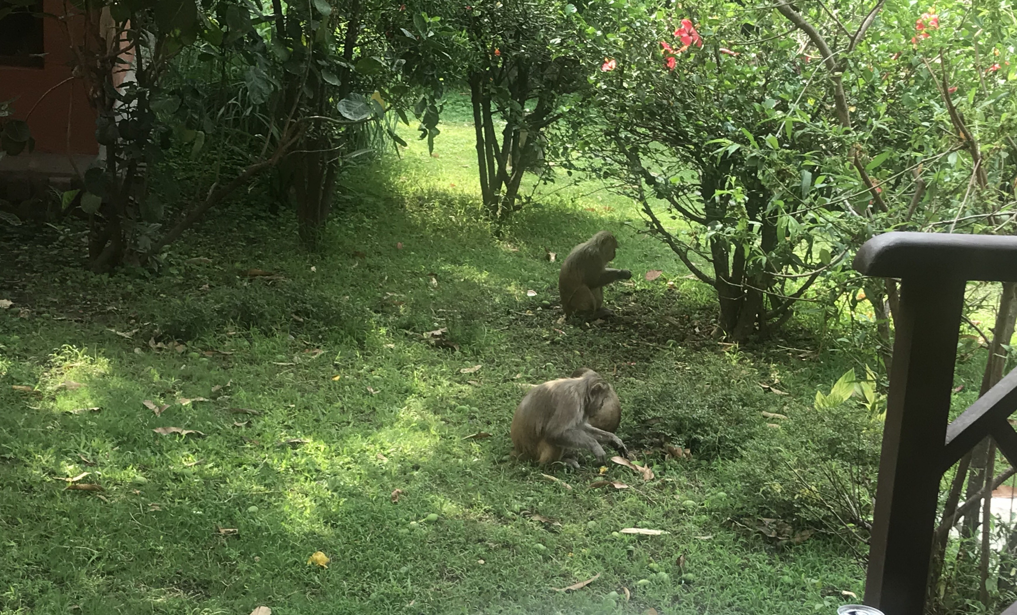 Monkeys outside the room