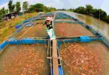 fish farms in India