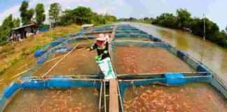 fish farms in India